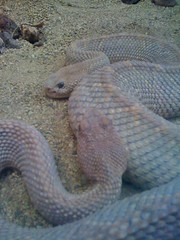 Snakes at Lincoln Park Zoo