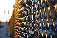 52/365 (Amy Geliebter) Tags: philadelphia bokeh fences 365 day52 goldenhour project365 52365 dayfiftytwo fencebokeh day52365