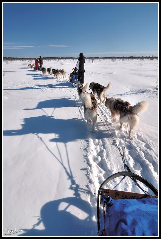 Traineaux à chiens