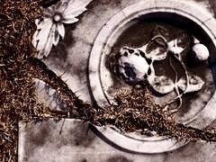 broken flowers (Mamluke) Tags: old flowers friedhof flower broken fleur cemetery grave grass rock stone georgia carved petals symbol blossom alt pierre south graf cementerio tomb tombstone flor crack southern oxford gravestone burial bloom aged thesouth marble grab blume fiore pietra viejo stein oud cracked southland tomba sud vieux symbolism herbe steen tombe vecchio cimitero piedra cimetire deepsouth kerkhof sepulcro  mamluke oxfordgeorgia oxfordcitycemetery