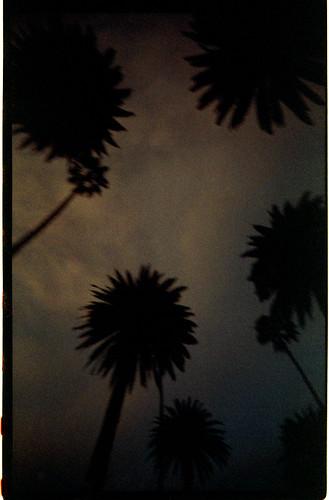 Palms @Dusk