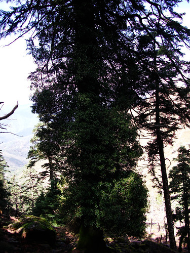 Ruta Sierra Bermeja (9)