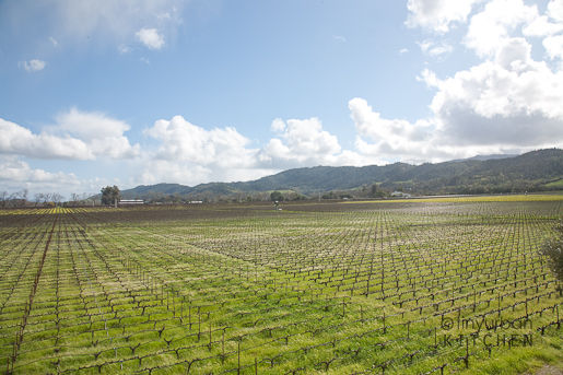 Robert Mondavi To Kalon Vineyards
