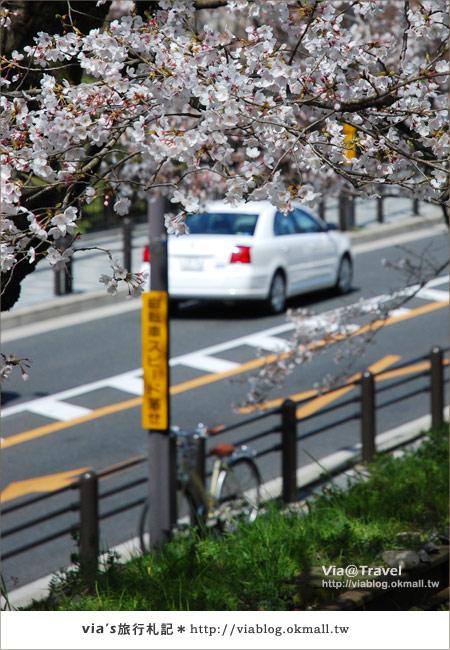 【via京都賞櫻行】鐵道上的櫻花美景~蹴上鐵道14
