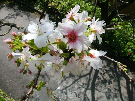 2010 Yangminshan Flower Festival