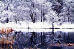 Frozen trees (waltersoluh) Tags: trees winter snow reflection nature landscape pond woods mywinners platinumphoto visiongroup colorsofthesoul redmatrix yourwonderland magicunicornverybest trolledproud adrinnesmagicalmoments pinnaclephotography