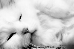 Pralinou (jack error) Tags: catnipaddicts