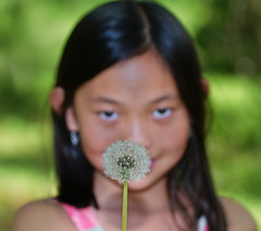 Little Dandelion Princess (bijoyKetan) Tags: family flowers portrait green girl beautiful boston manchester princess massachusetts dandelion host softbox ketan bekar polapain canonspeedlite430exii canonef100mmf28lmacroisusm bijoyketan