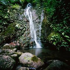 Aihualama Falls (art y fotos) Tags: 120 6x6 mediumformat reflections hawaii stream oahu handmade bamboo pinhole homemade pools waterfalls honolulu bambole manoa universityofhawaiiatmanoa lyonarboretum thecompact aihualama kodakektar100 lebambolemkii bamboopinholecamera