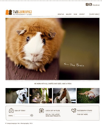 twoguineapigs Pet Photography, new website designed by Squad Ink and developed by Safari Yellow; sydney pet photographer.