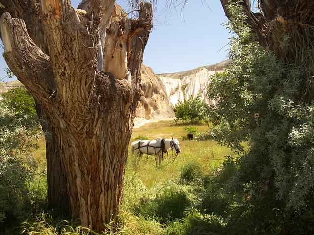 看到這張照片,我想到的是「古道,西風,瘦馬」,感覺很詩意