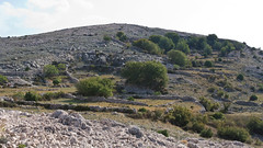 Hill (Andreas Helke) Tags: nature stone wall canon landscape island europa europe y hill natur croatia stonewall dslr lm 169 landschaft canoneos350d twa ktk candreashelke landscapeformat canonefs1755mmf28isusm canon1755is staribaska donothide brush3 uploaded2009 9x16l