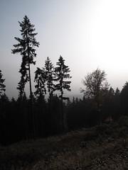 unterhalb Herzberg (karsten13) Tags: feldberg 01112009