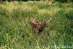 Gemütlicher Elch (sntssche) Tags: germany deutschland zoo moose sachsen alemania elk elan wald allemagne germania elch wildgehege moritzburg alce tiergehege wildfütterung alcesalces eurasianelk wildtiergehege earthasia worldtrekker
