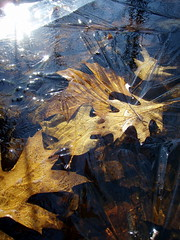 frozenfall (Orbiting Sol) Tags: fall ice leaves captured