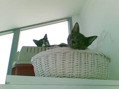 Looking down (Dora X) Tags: cats kittens ursula meimei