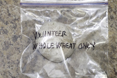 starter packaged for volunteer sourdough experiment/demonstration