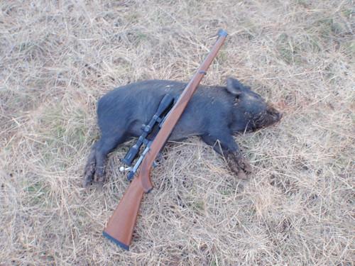 pig head shot