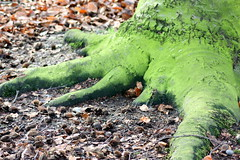 Greenest of Roots (Sarah Jayne Anderson) Tags: trees dog pet pets green dogs nature leaves woods greenwich roots pug spaniel bexley pugs thamesmead bostallwoods