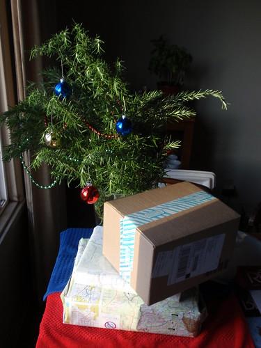 Christmas Rosemary 03