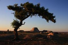 Dog rocks + Pine (peppershot) Tags: sunset tree landscapes rocks australia victoria lonetree dogrocks