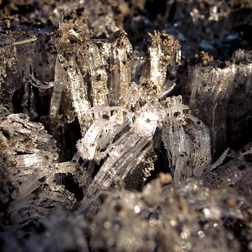 Ice Fungi 3