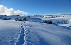 la trace (b.four) Tags: snow landscape track trace neve neige paysage paesaggio alpesmaritimes coth calern rubyphotographer mygearandmepremium mygearandmebronze mygearandmesilver mygearandmegold mygearandmeplatinum