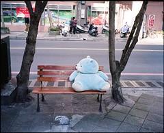 Abandoned bear on bench (deepstoat) Tags: bear stilllife 120 mediumformat bench alone sad taiwan roll left mamiya7ii kodakportra deepstoat