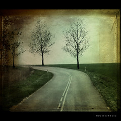 Left (PetterPhoto) Tags: road trip trees tree texture field turn square perspective poland crop tall left squarecrop 500x500 petterphoto nofk