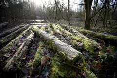 Shorne Woods Country Park (Jason Webber) Tags: park wood winter forest countryside kent moss woods frost country january logs sunny pile 2009 shorne jasonwebber shornewoodscountrypark
