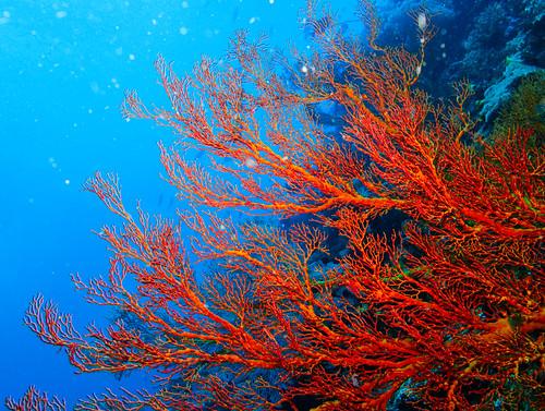 Bunaken Underwater 14