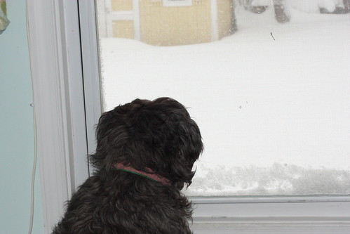 blizzardfeb10 282