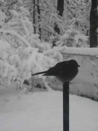 2010February12_Snow 001