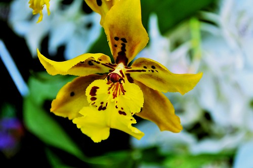 Botanical Garden Orchids