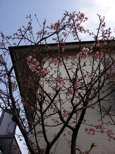 2010-02-19 東京之旅第五天 041