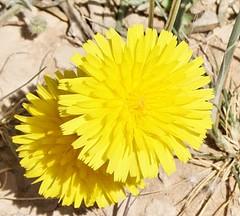 يالبى قلبه الاصفر وبس (GHANEM ALYUSEF) Tags: وبس قلبه الاصفر يالبى