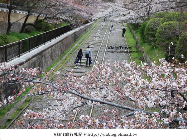 【via京都賞櫻行】鐵道上的櫻花美景~蹴上鐵道3