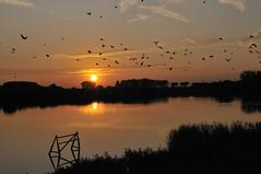 zonsonder_NSC3764-1 (dirk_Rampie) Tags: reflection nature birds landscape heavenandearth