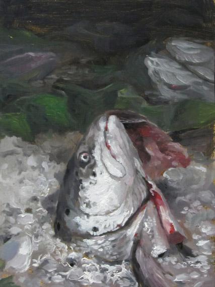 fishhead427