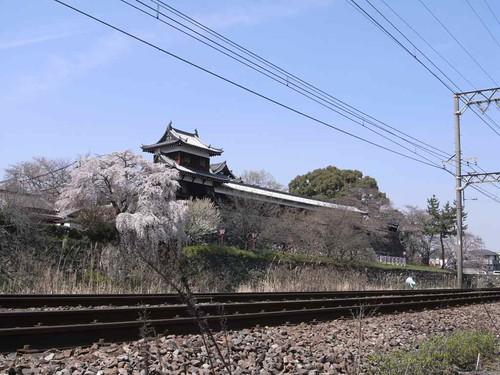 大和郡山お城まつり-01