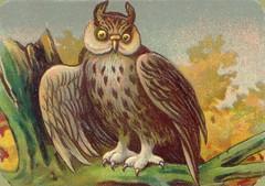 oiseauchromos 13