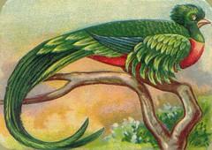 oiseauchromos 9