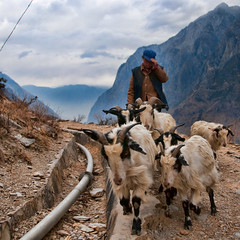 A herd at the gorge (samthe8th) Tags: sam explore goats hero winner yunnan frontpage herd tigerleapinggorge naxi d90 matchpointwinner flickrchallengegroup flickrchallengewinner thechallengefactory thepinnaclehof tphofweek40 lphiking fcgdone greenlantern2