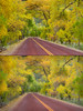 "Autumn Road comparison - bottom image with ""Clarity"" adjustment"