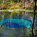 Between+the+Trees+at+Blue+Hole+Ichetucknee