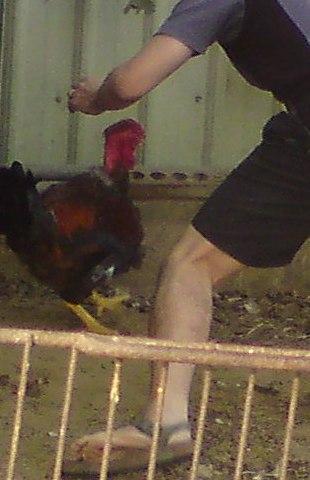 翻腳刀抓雞
