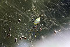 武当的蜘蛛