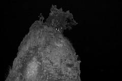 _MG_5064 (_T604) Tags: friends vancouver climbing stanleypark siwashrock stupidfun nightclimbing