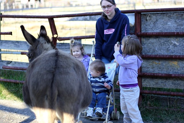 shelly, kids, and donkey