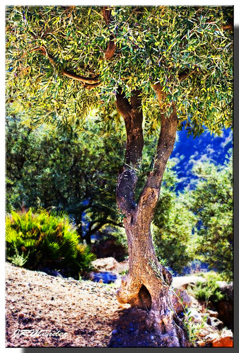 El Huerto de los Olivos